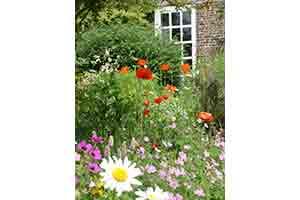 garden-image-1