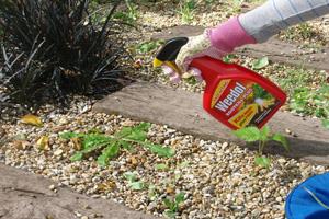 Kill-weeds-with-a-sy#B51614