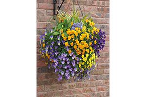 Pansy-hanging-basket