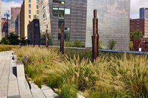 grasses-