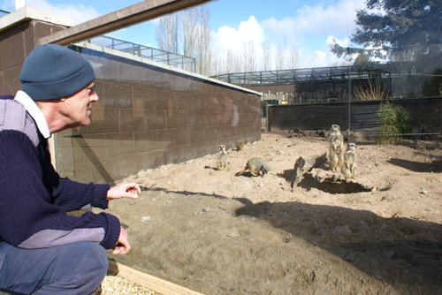 middle-Graham-Eyre-with-meerkats_credit-Twycross-Zoo