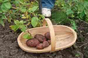box-Time-to-harvest-main#B1C0F8