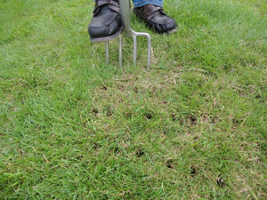 side-Autumn-Lawn-Spiking-copy