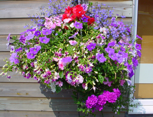 side-Hanging-baskets-are-#A68DCA