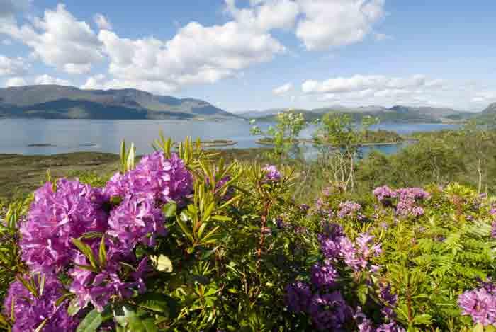 banner-Rhododendron-ponticum