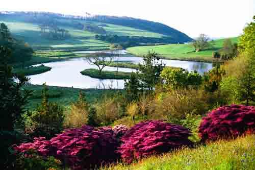 middle-Azalea-'Amoena'.-Lake-and-sea-view-(c.-Caerhays)