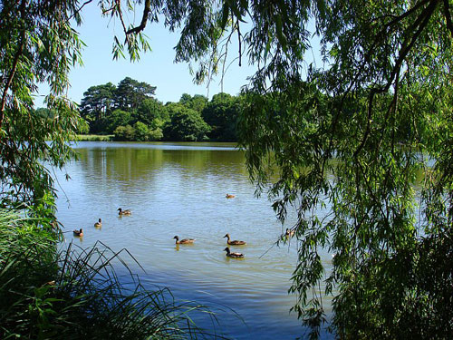 middle-Hatfield-Forest-lake-r