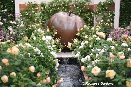 middle-roses-DSC_2809-copy