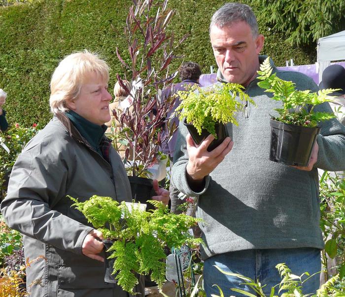 banner-Choosing-ferns-at-Knoll-Gardens-copy