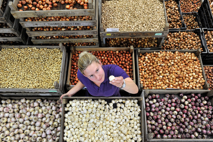 banner-claire-laker-inspects-one-of-thousands-of-bulbs-set-to-fly-off-the-shelves-at-wyevale-garden-centres-this-weekend-landscape