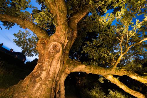middle-the-birnam-oak-niall-benvie
