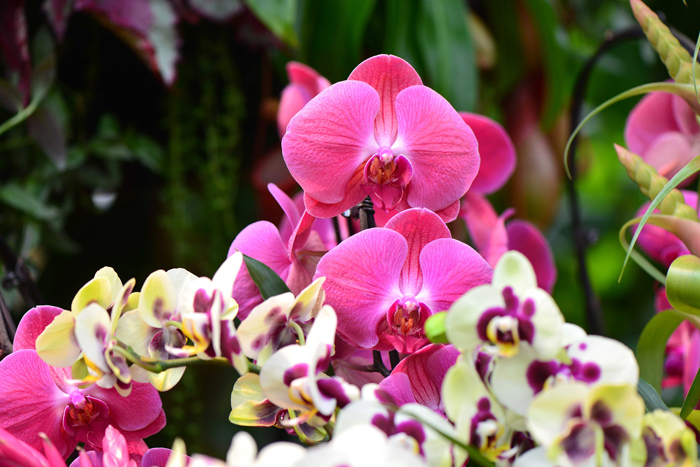banner-orchids_4